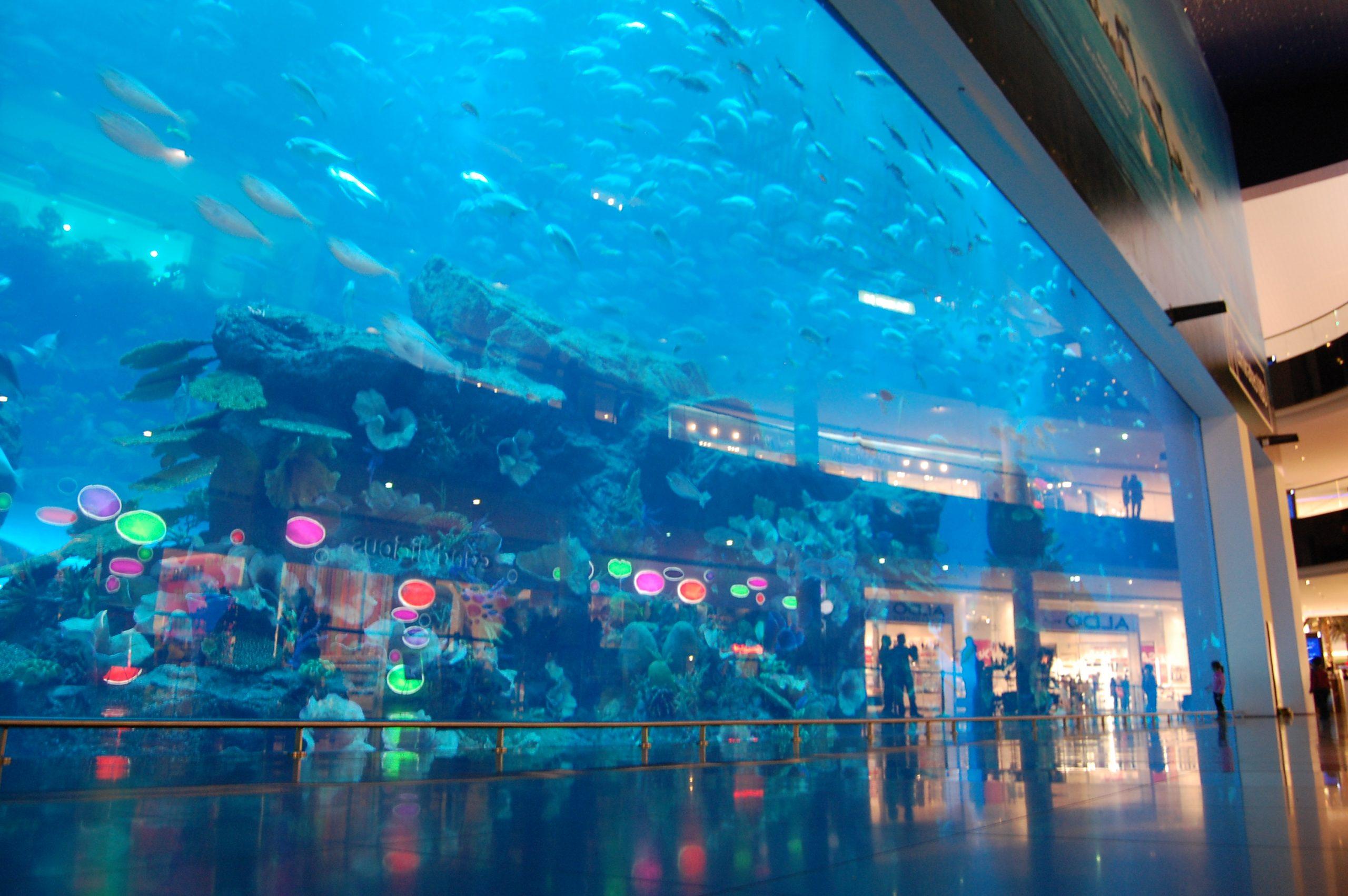dubai aquarium - إكواريوم دبي (1)