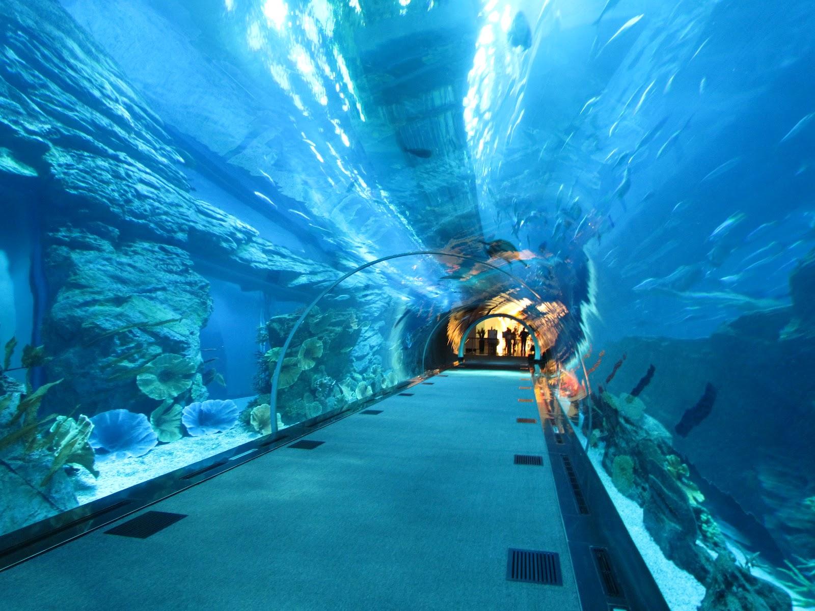 dubai aquarium - إكواريوم دبي (2)