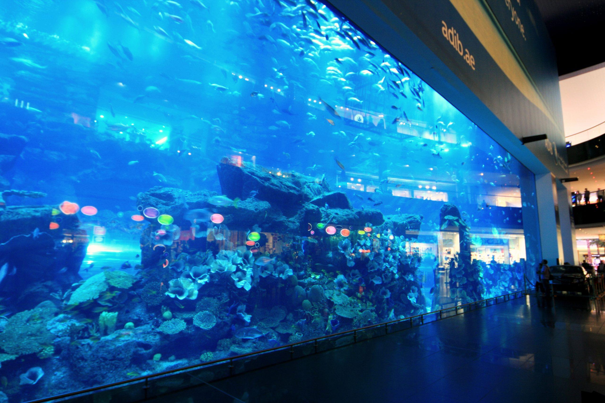 dubai aquarium - إكواريوم دبي (3)