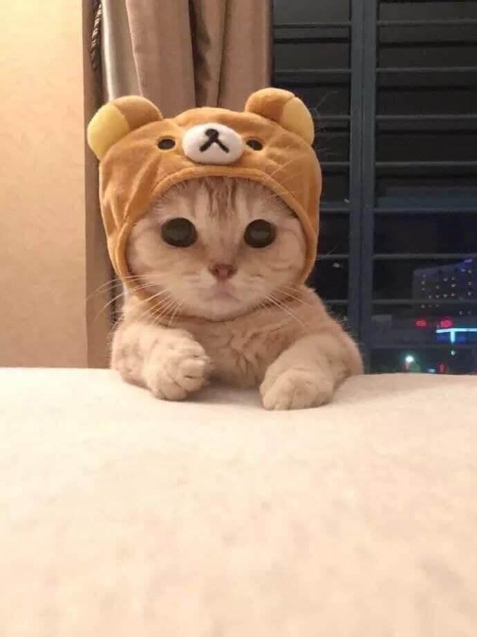 cats قطط