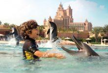 صورة خليج الدلافين دبي