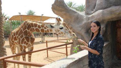 صورة سعر تذكرة حديقة الإمارات للحيوانات