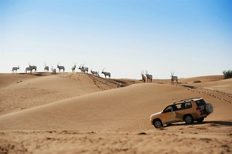 محمية دبي الصحراوية (2)
